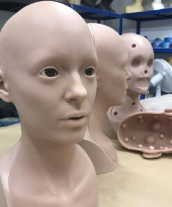 Anatomically Correct Training Heads